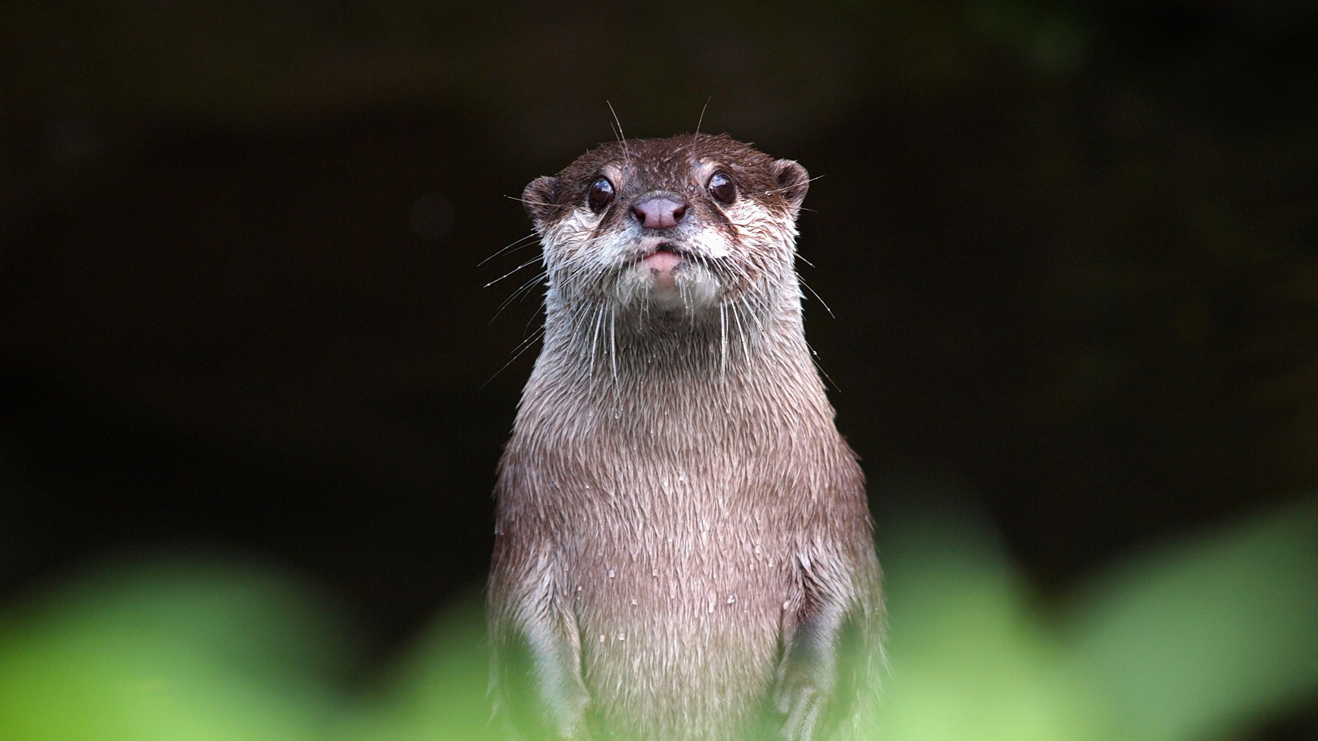 Get Otters Microsoft Store