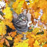 Animals in Autumn