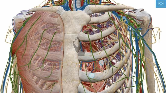 Buy Human Anatomy Atlas 2018: Complete 3D Human Body - Microsoft Store