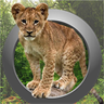 Animal Calls, Sounds & Ringtones