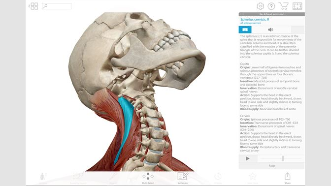 Buy Human Anatomy Atlas 2018 Complete 3d Human Body Microsoft Store