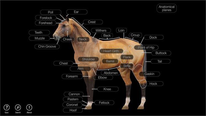 Buy Horse Anatomy: Equine 3D - Microsoft Store en-CA