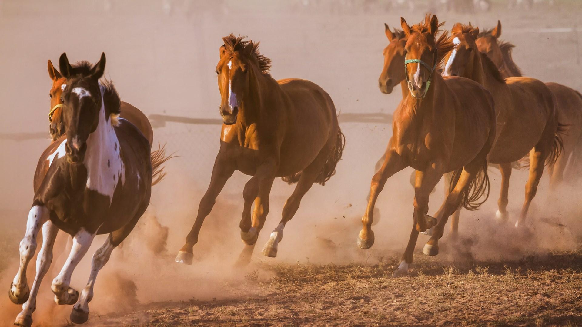Get Running Horses Microsoft Store
