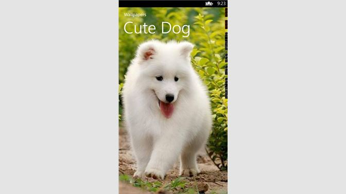 Get Cute Dog Wallpapers Microsoft Store