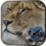 Hidden Animals : Photo Hunt . Hidden Object Games