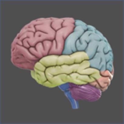 Get 3d Brain Microsoft Store