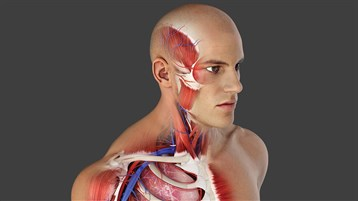 Complete Anatomy 19 for Windows